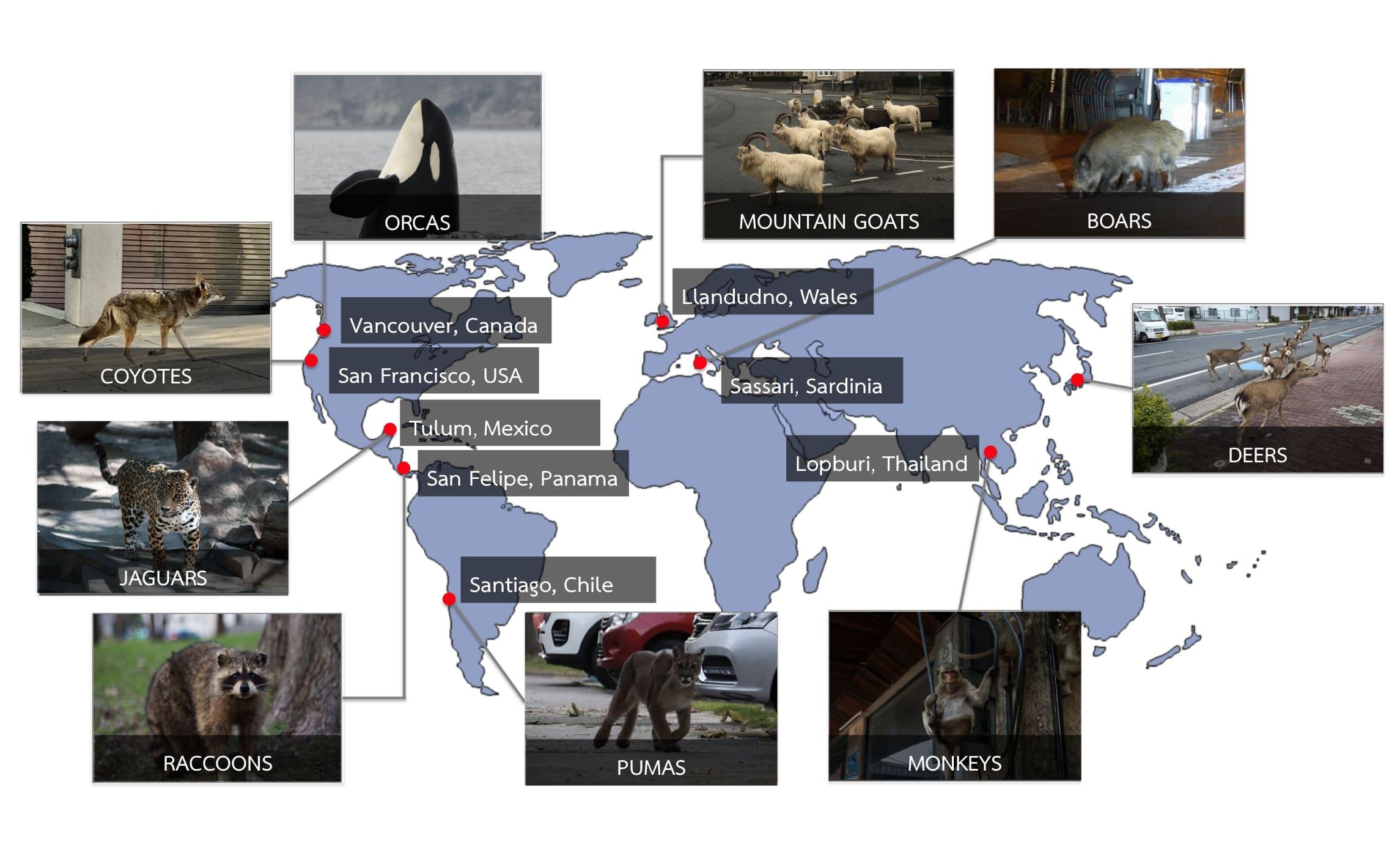 Eine Weltkarte, die anzeigt, wo welche Tiere gesichtet wurden.